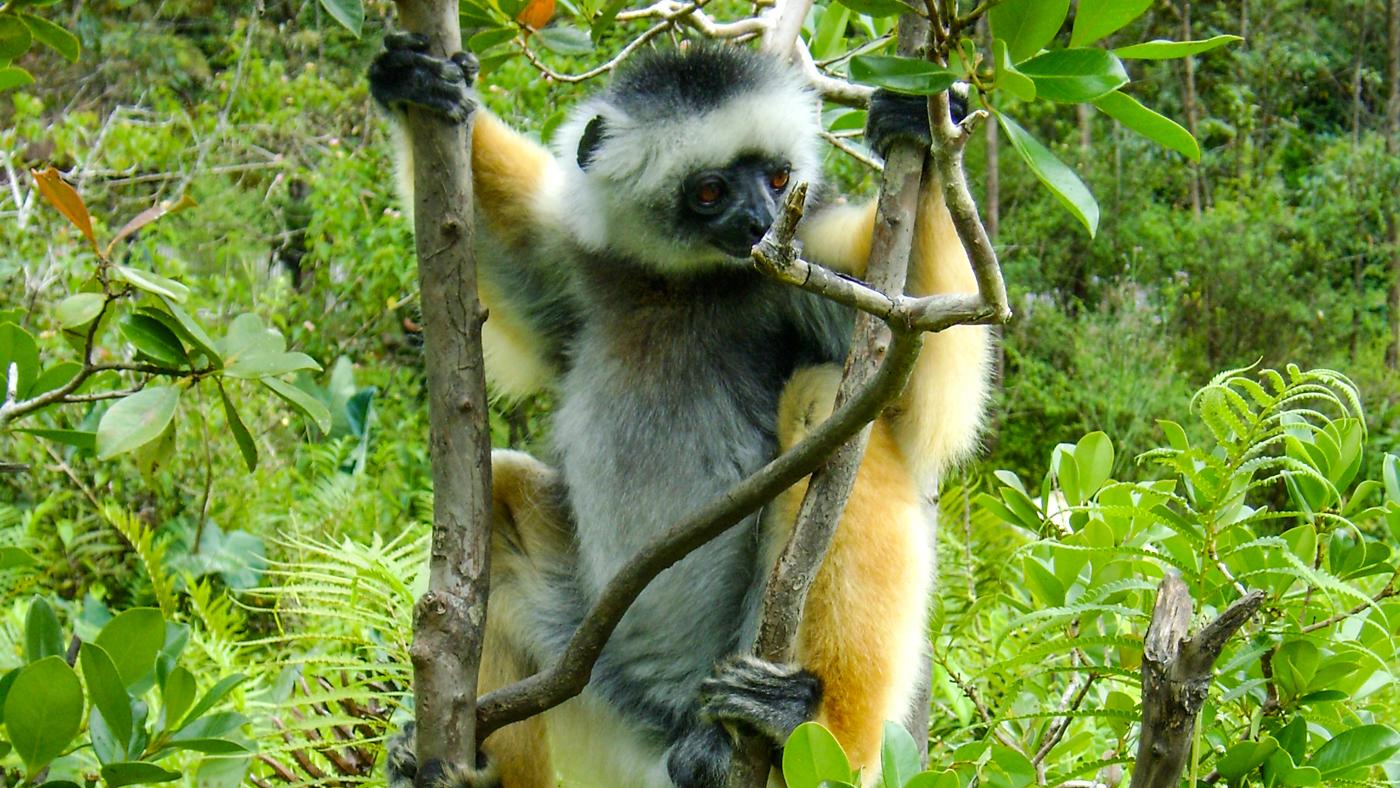 Where do lemurs live? 5